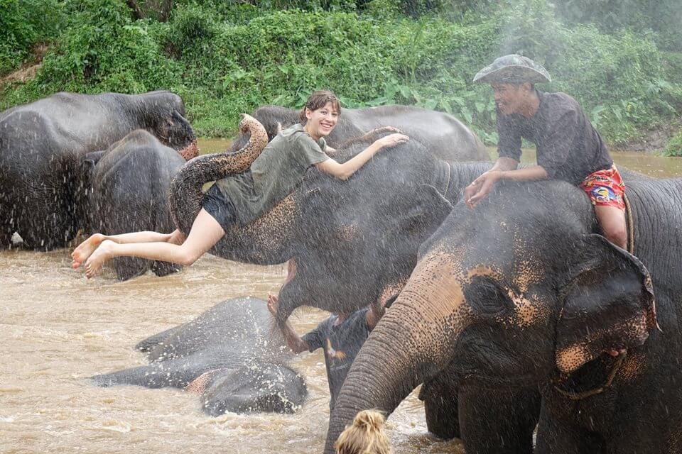 Elephant Excursion as part of ProTEFL teaching course